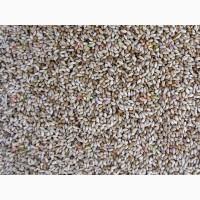 ООО НПП «Зарайские семена» закупает семена: тимофеевка от 40 тонн