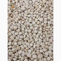 ООО НПП Зарайские семена продает люпин дега, в мешках и россыпью оптом и в розницу