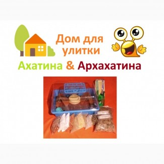 Комплекты с Дюной для улиток Ахатина и Архахатина
