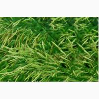ООО НПП «Зарайские семена» покупает семена:кострец безостый от 20 тонн