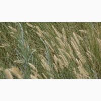 ООО НПП «Зарайские семена» покупает семена: житняк от 20 тонн