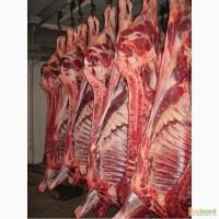 Полутуши свинина/говядина от 158/200 руб