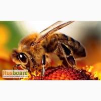 Пчелопакеты, пчёлы