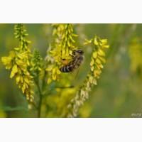 ООО НПП «Зарайские семена» покупает семена: донник желтый от 40 тонн