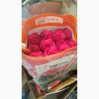 Предлагаем Эквадорскую розу Hermosa Оптом напямую от с плантации от 1 Коробки