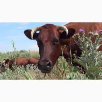 Продам ферму в Крыму