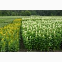 ООО НПП «Зарайские семена» покупает фуражное зерно люпин