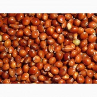 Семена просо красного