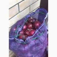 Продаю оптом фиолетовый лук