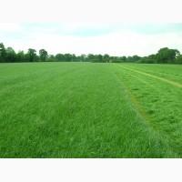 Продаем травосмеси для пастбищ, заготовки сена и сенажа