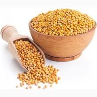 Семена горчицы Радуга, Фея, Руслана, Колла, Ника и др