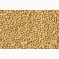 ООО НПП «Зарайские семена» покупает фуражное зерно просо желтое от 10 тонн
