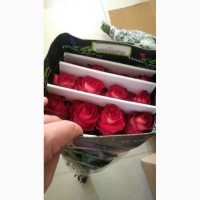 Предлагаем Голландскую розу Freedom Оптом напямую от производителя от 1 Коробки