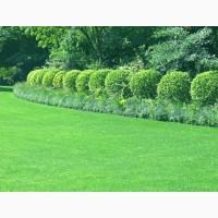 Продаем газонные травосмеси для закладки газонов и озеленения различных территорий