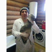 Лечение попугаев и птиц в Щербинке