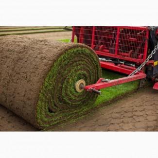Травосмеси для закладки различных газонов и рулонные газоны