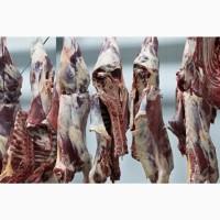 Опт мясо свинина, баранина, говядина, куриное