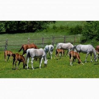 Продаю лошадей и жеребят на откорм. 125 руб/кг