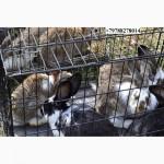 Кролики для разведения