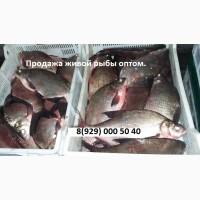 Живая рыба. Свежая рыба. Продажа оптом рыбы