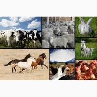 Кальций для производства комбикормов для с/х животных и подкормки птиц