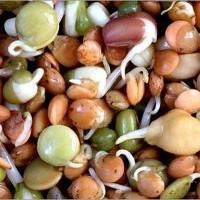 ООО НПП «Зарайские семена» закупает зернобобовые смеси от 20 тонн