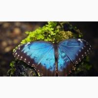 Продажа Живых тропических бабочек из Коскта Рикки более 30 Видов