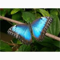 Живые тропические бабочки Зимой и Летом, Удивите ваших близких