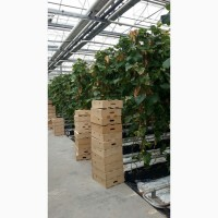 Сбор и упаковка помидоров или огурцов ( на выбор )