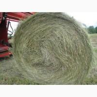 Хорошее сено в рулонах луговое пойменное
