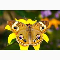 Высоко доходный бизнес ферма Живых Восхитительных Бабочек из Амазонки