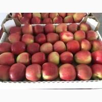 Яблоки оптом Краснодарский край