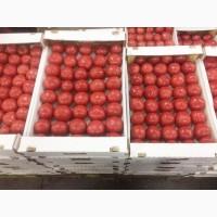 Продаем помидоры оптом в краснодарском крае, помидор оптом краснодарский