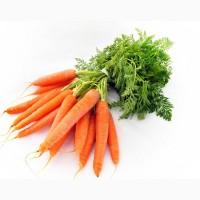 Морковь нового урожая 2020