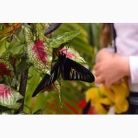 Высоко доходный бизнес ферма Живых Тропических Бабочек из Филиппин