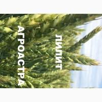 Семена озимой мягкой пшеница сорт Лилит ЭС/РС1/РС2