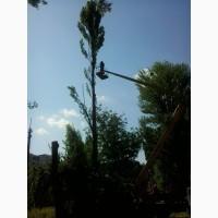 Удаление деревьев, санитарная обрезка, защита деревьев, корчевание пней
