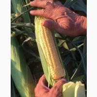 Выращиваю кукурузу. Принимаю заявки заранее на кукурузу в початках